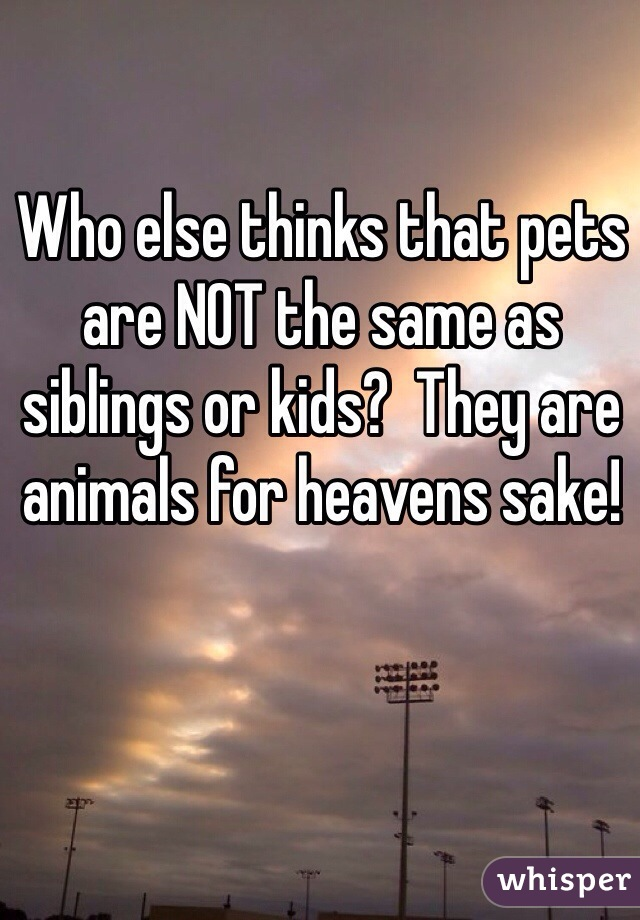 Who else thinks that pets are NOT the same as siblings or kids?  They are animals for heavens sake!