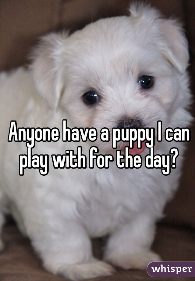 Anyone have a puppy I can play with for the day?