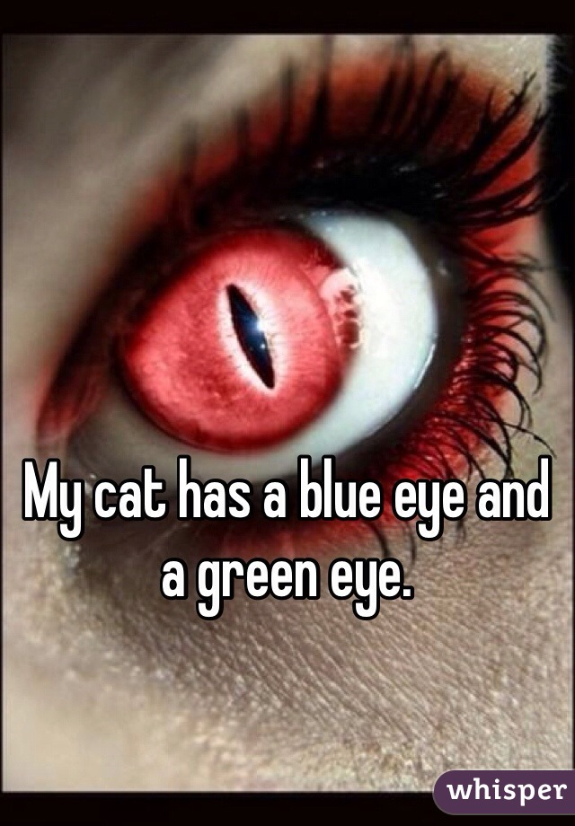 My cat has a blue eye and a green eye.