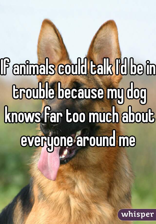 If animals could talk I'd be in trouble because my dog knows far too much about everyone around me
