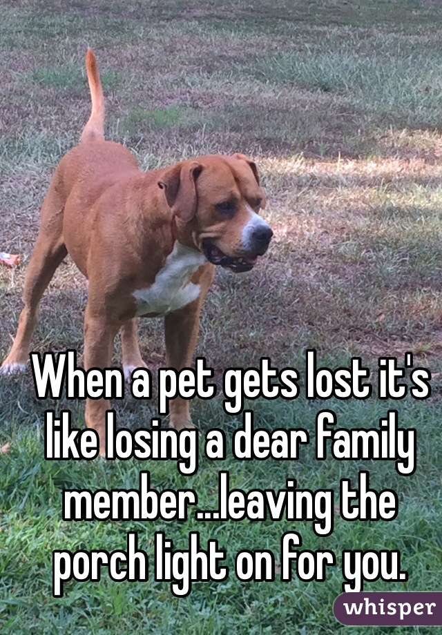 When a pet gets lost it's like losing a dear family member...leaving the porch light on for you.
