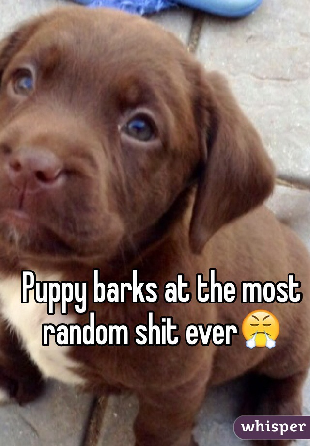 Puppy barks at the most random shit ever😤