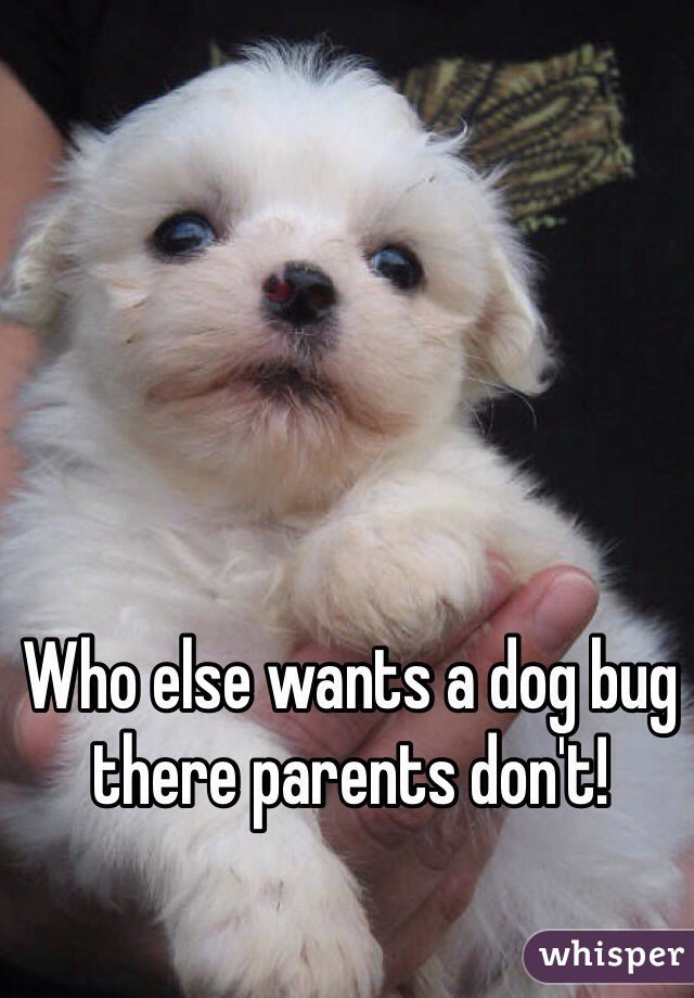 Who else wants a dog bug there parents don't!