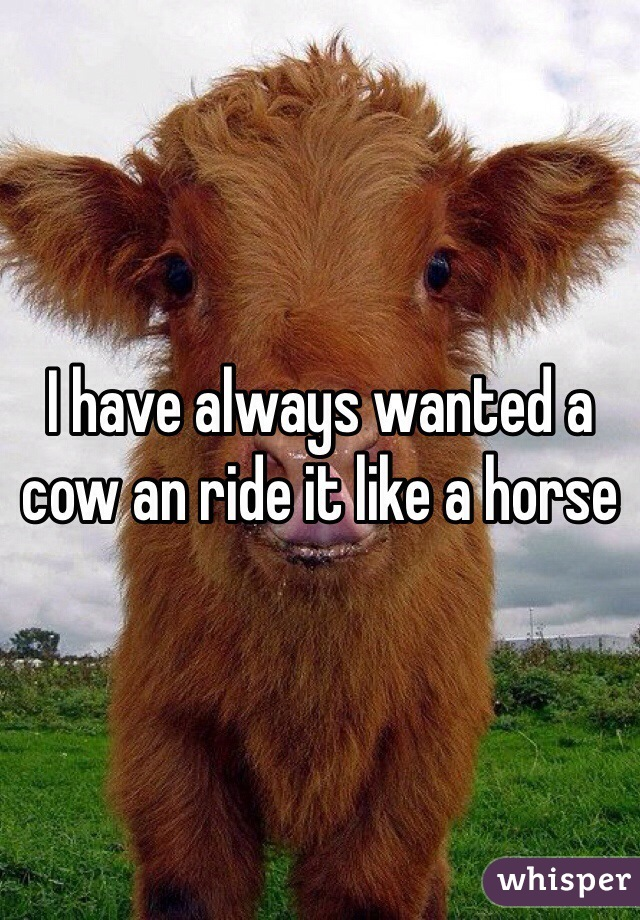 I have always wanted a cow an ride it like a horse