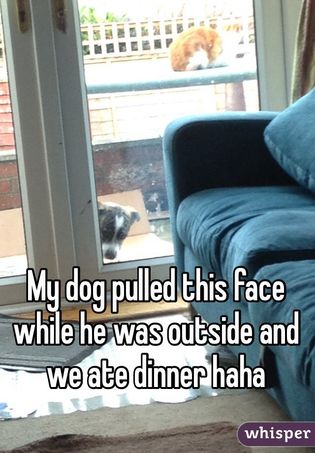 My dog pulled this face while he was outside and we ate dinner haha