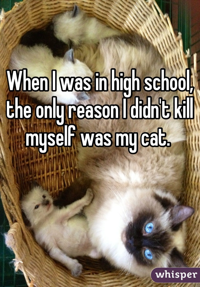 When I was in high school, the only reason I didn't kill myself was my cat.