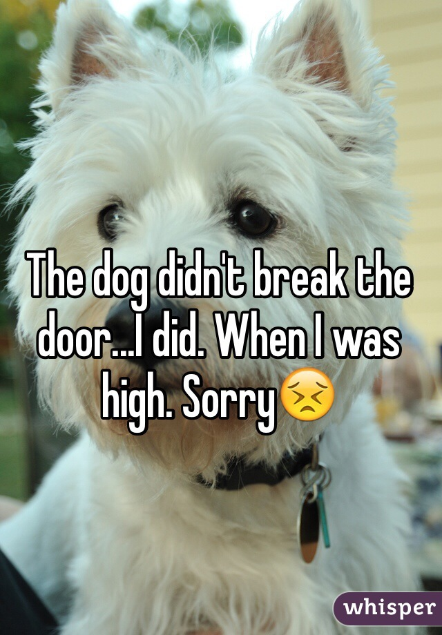 The dog didn't break the door...I did. When I was high. Sorry😣