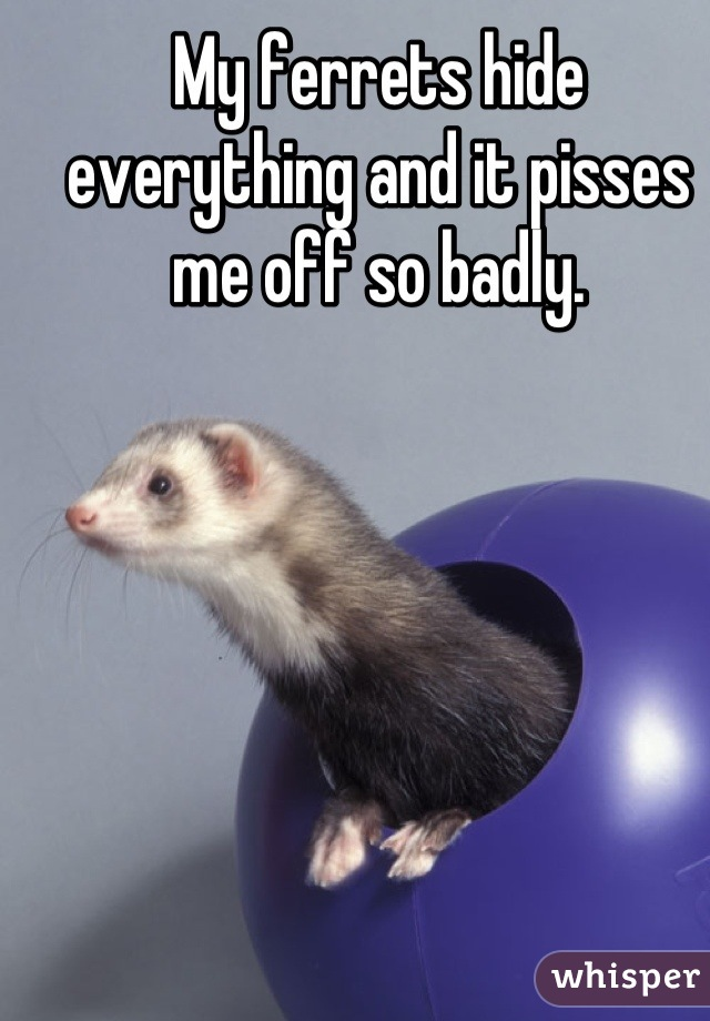 My ferrets hide everything and it pisses me off so badly.