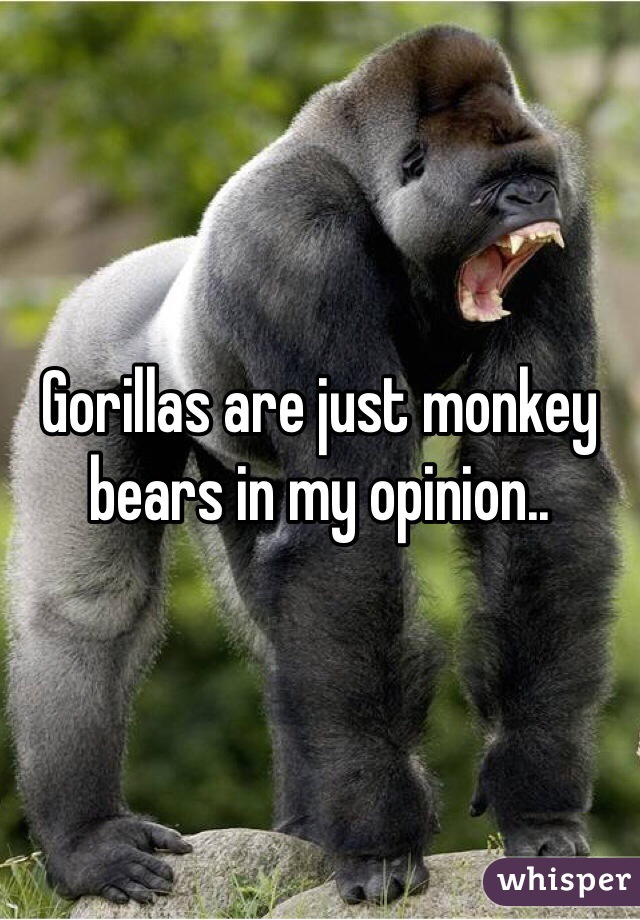Gorillas are just monkey bears in my opinion..