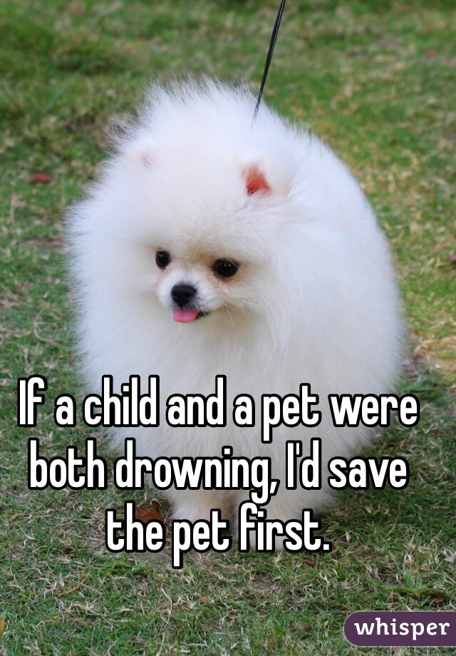 If a child and a pet were both drowning, I'd save the pet first.
