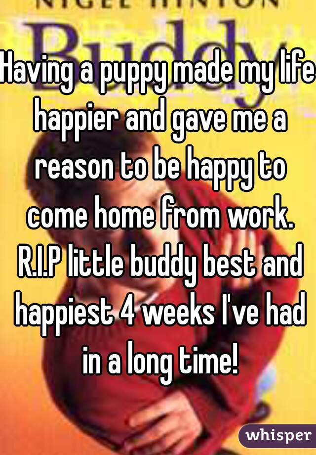 Having a puppy made my life happier and gave me a reason to be happy to come home from work. R.I.P little buddy best and happiest 4 weeks I've had in a long time!