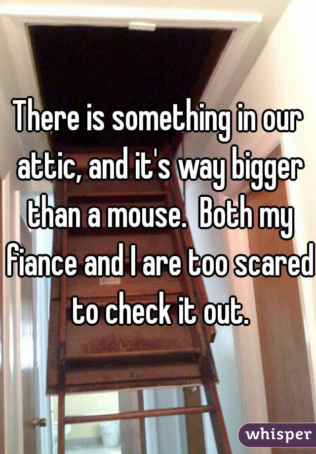 There is something in our attic, and it's way bigger than a mouse.  Both my fiance and I are too scared to check it out.