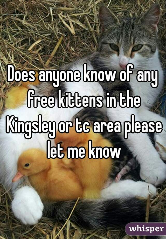 Does anyone know of any free kittens in the Kingsley or tc area please let me know