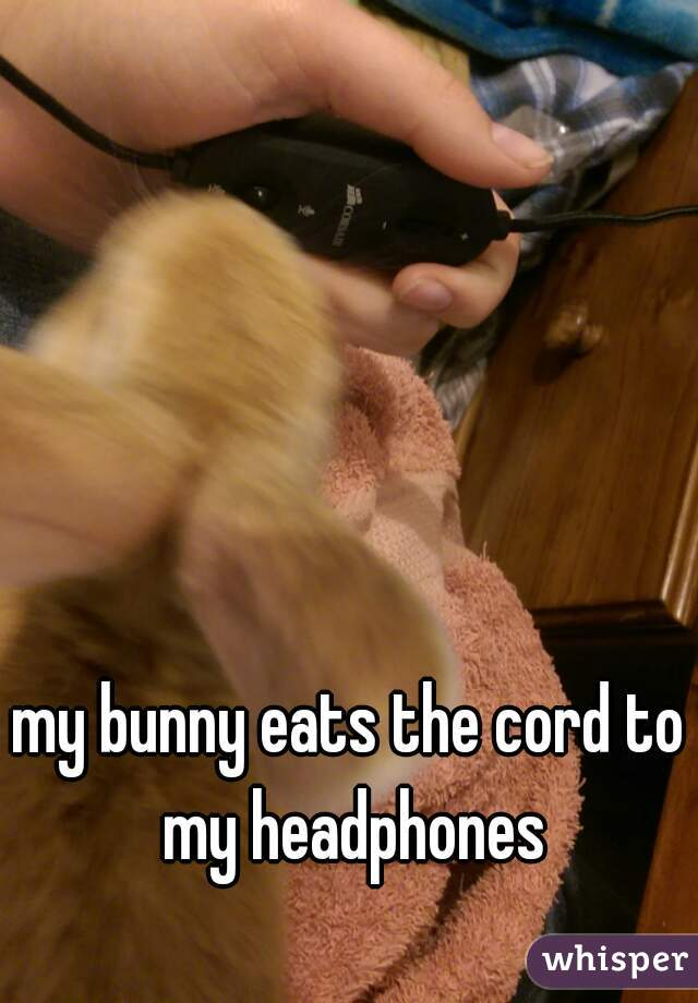 my bunny eats the cord to my headphones