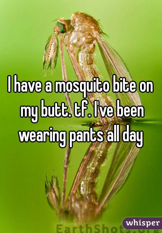 I have a mosquito bite on my butt. tf. I've been wearing pants all day