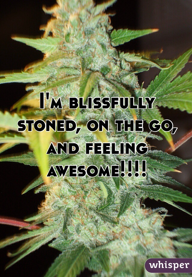 I'm blissfully stoned, on the go, and feeling awesome!!!!