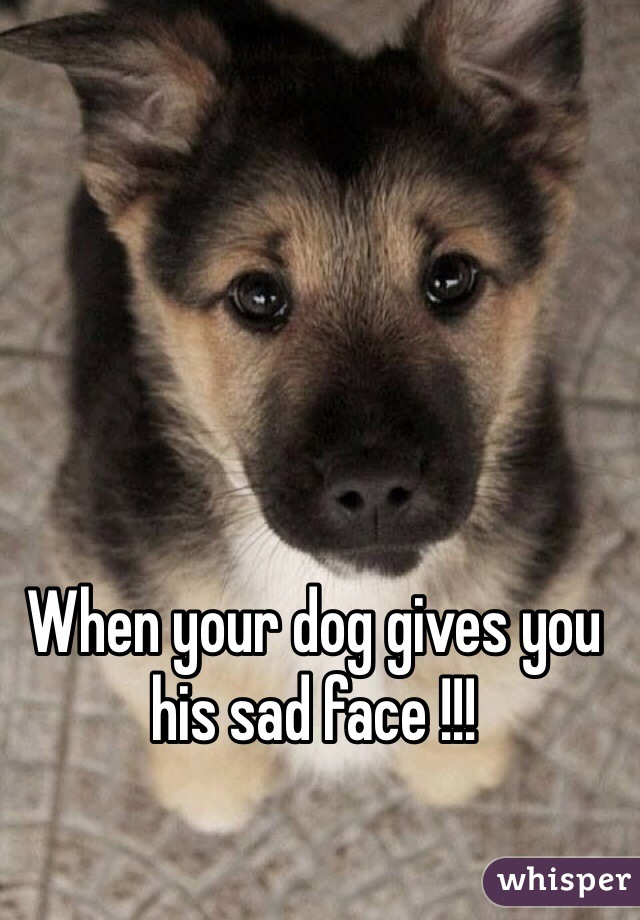 When your dog gives you his sad face !!!