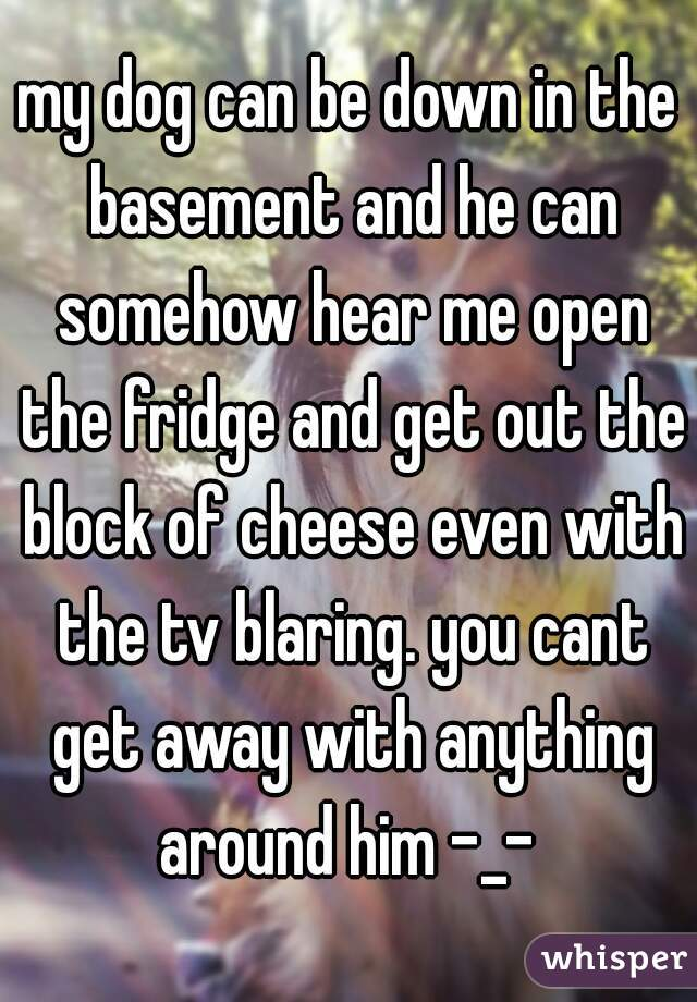 my dog can be down in the basement and he can somehow hear me open the fridge and get out the block of cheese even with the tv blaring. you cant get away with anything around him -_-