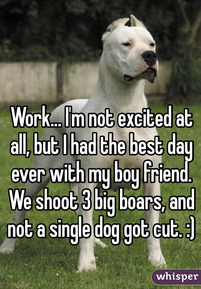 Work... I'm not excited at all, but I had the best day ever with my boy friend. We shoot 3 big boars, and not a single dog got cut. :)