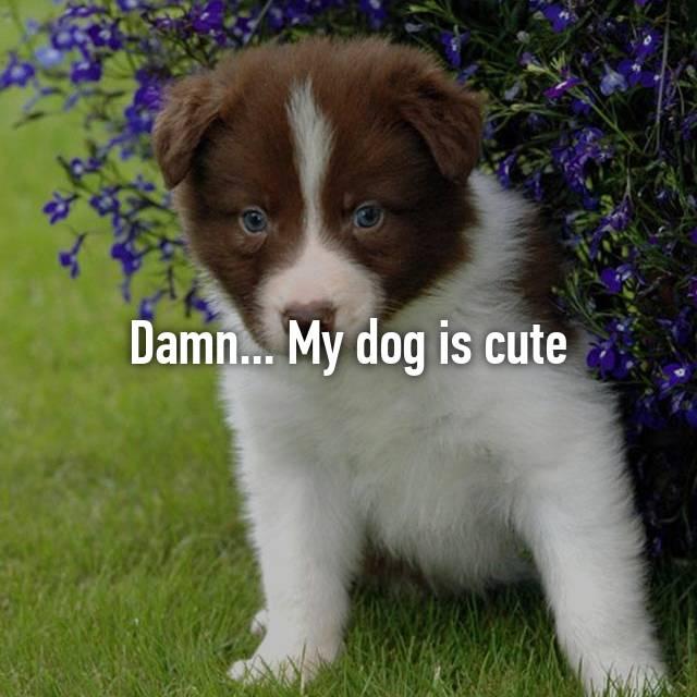 Damn... My dog is cute