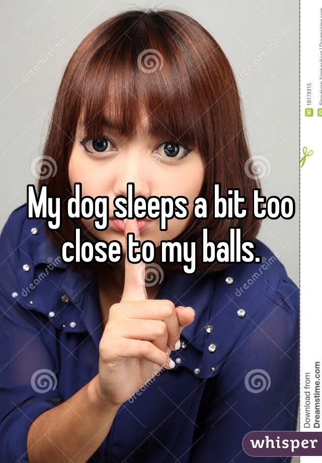 My dog sleeps a bit too close to my balls.