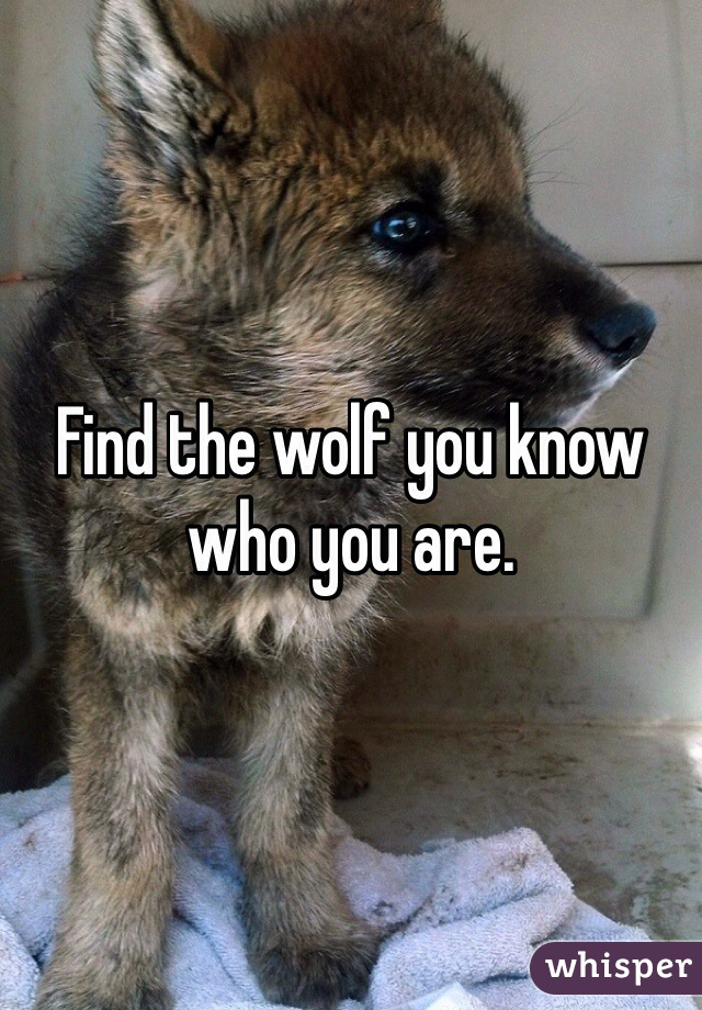 Find the wolf you know who you are.