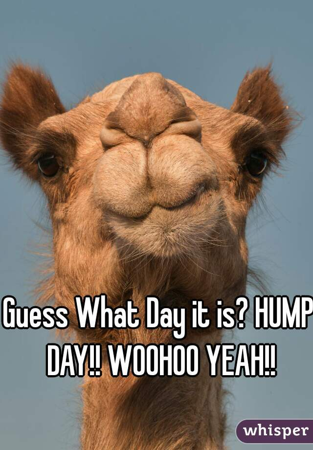 Guess What Day it is? HUMP DAY!! WOOHOO YEAH!!