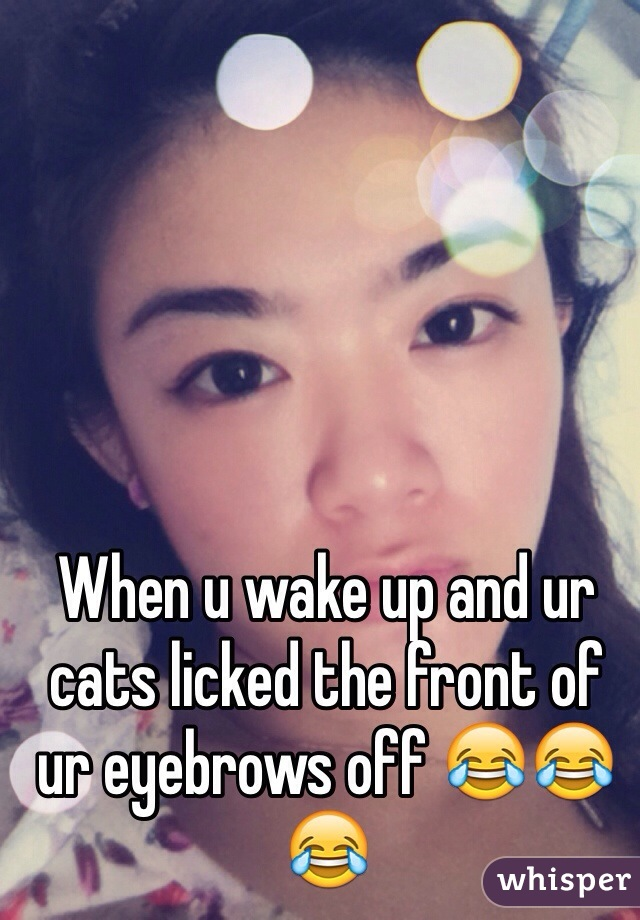 When u wake up and ur cats licked the front of ur eyebrows off 😂😂😂