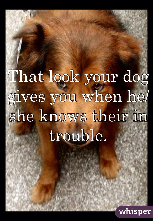 That look your dog gives you when he/she knows their in trouble.
