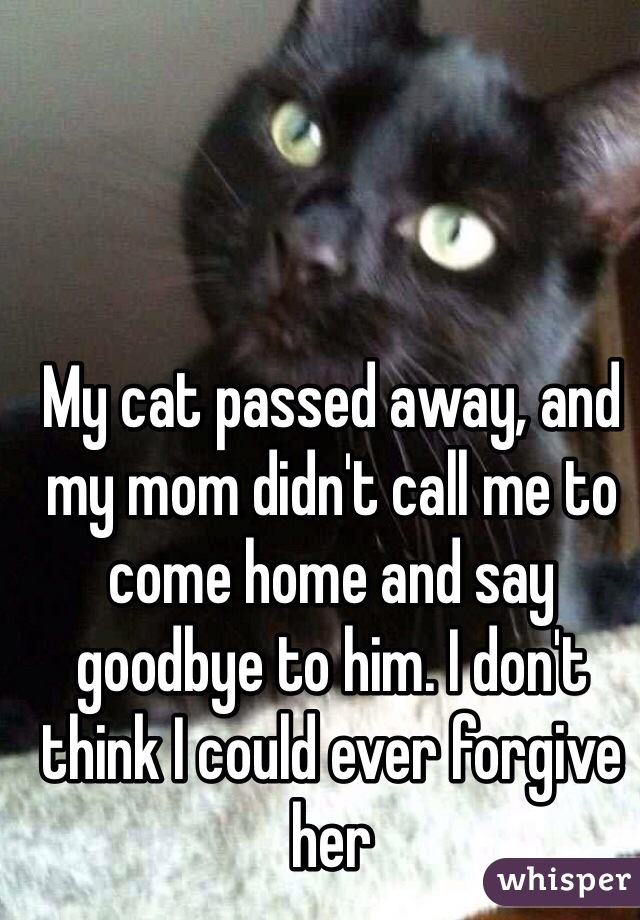 My cat passed away, and my mom didn't call me to come home and say goodbye to him. I don't think I could ever forgive her