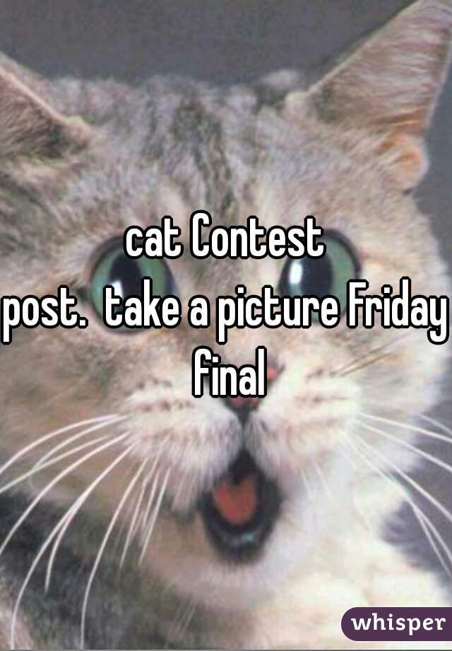 cat Contest post.  take a picture Friday final