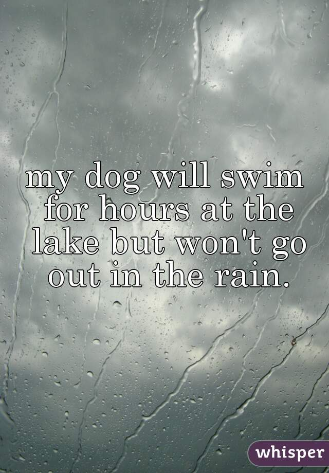 my dog will swim for hours at the lake but won't go out in the rain.