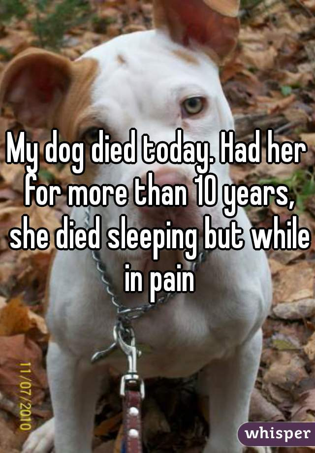 My dog died today. Had her for more than 10 years, she died sleeping but while in pain