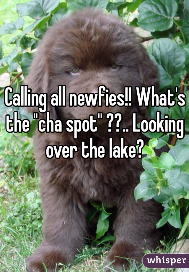 "Calling all newfies!! What's the ""cha spot"" ??.. Looking over the lake?"