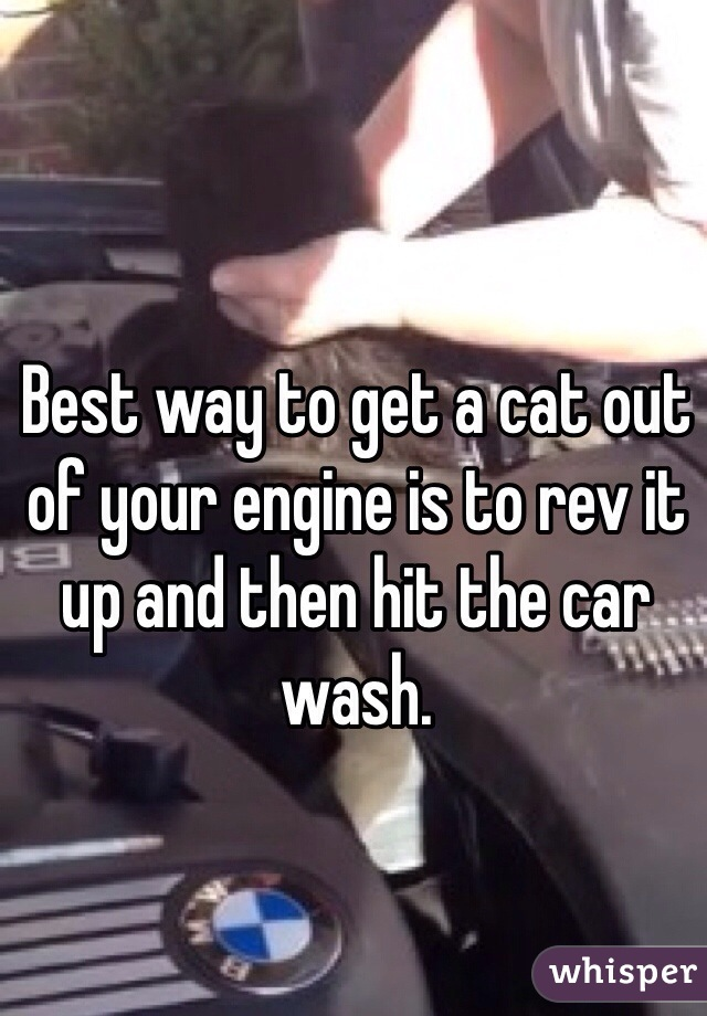 Best way to get a cat out of your engine is to rev it up and then hit the car wash.