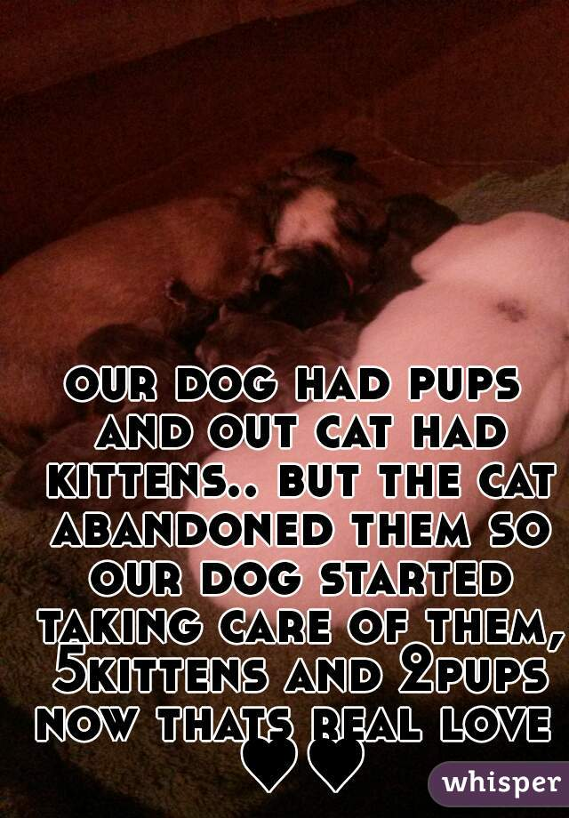 our dog had pups and out cat had kittens.. but the cat abandoned them so our dog started taking care of them, 5kittens and 2pups now thats real love ♥♥