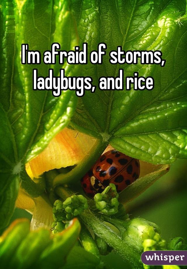 I'm afraid of storms, ladybugs, and rice