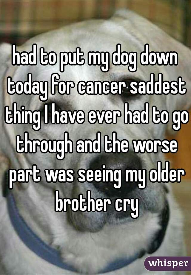had to put my dog down today for cancer saddest thing I have ever had to go through and the worse part was seeing my older brother cry