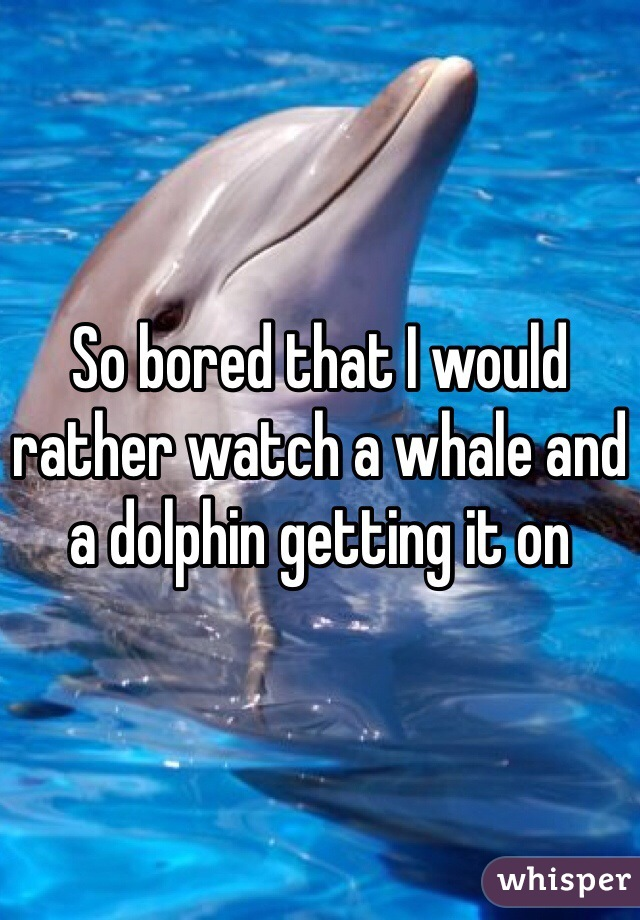 So bored that I would rather watch a whale and a dolphin getting it on