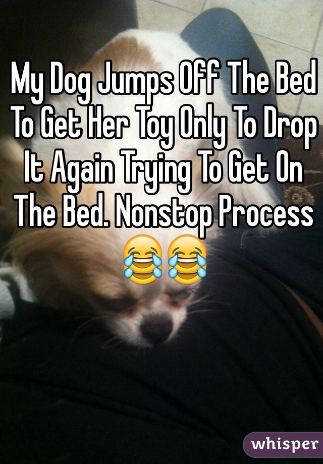 My Dog Jumps Off The Bed To Get Her Toy Only To Drop It Again Trying To Get On The Bed. Nonstop Process 😂😂