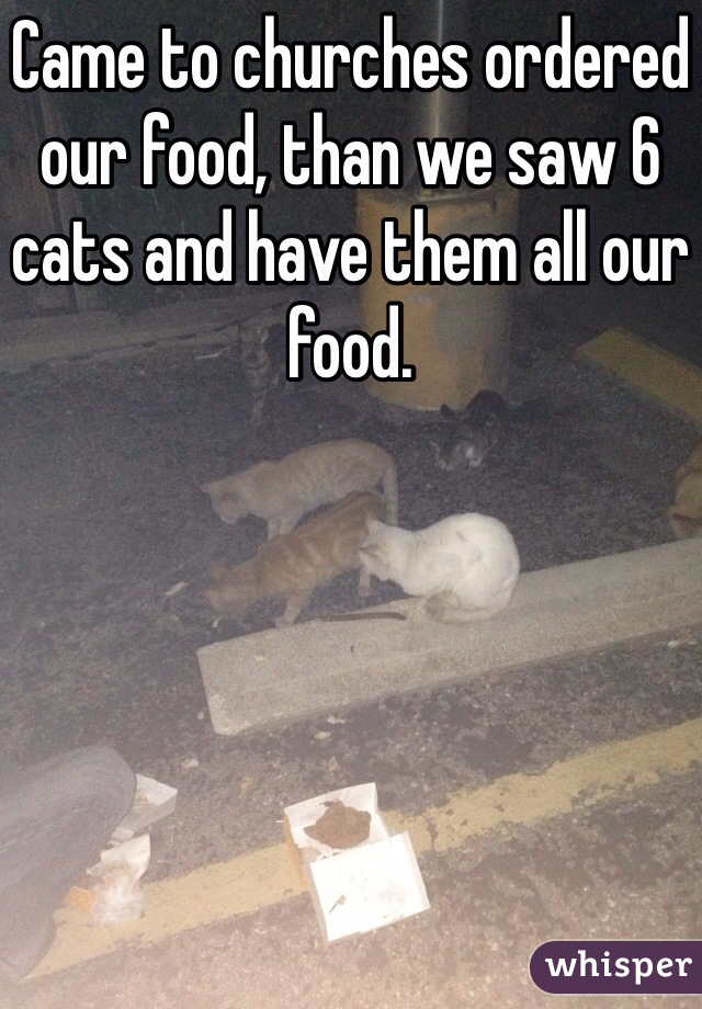 Came to churches ordered our food, than we saw 6 cats and have them all our food.