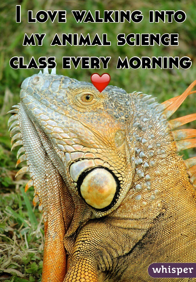 I love walking into my animal science class every morning ❤️