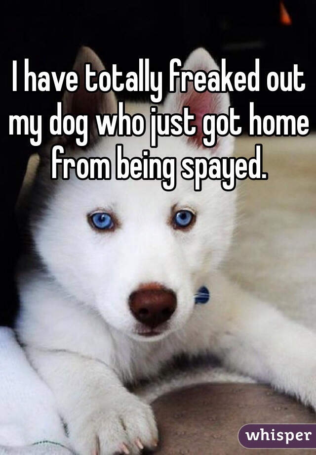 I have totally freaked out my dog who just got home from being spayed.
