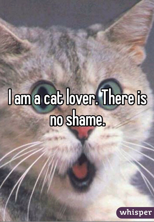 I am a cat lover. There is no shame.