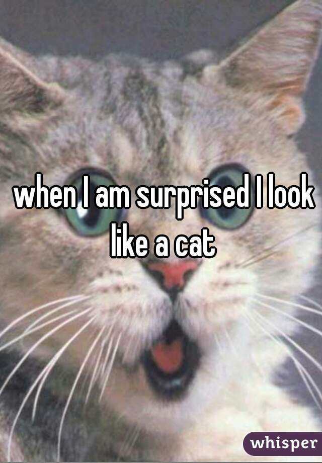 when I am surprised I look like a cat