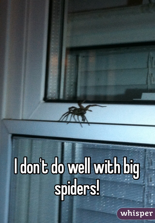 I don't do well with big spiders!