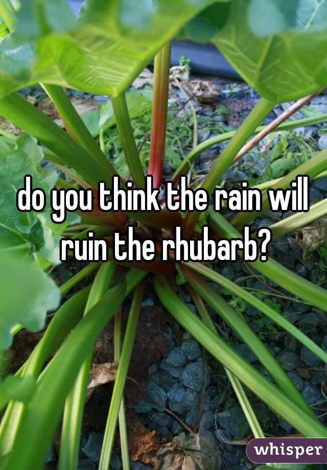 do you think the rain will ruin the rhubarb?