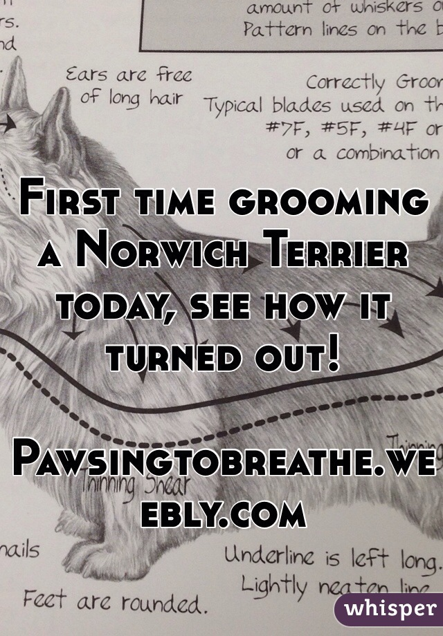 First time grooming a Norwich Terrier today, see how it turned out!  Pawsingtobreathe.weebly.com