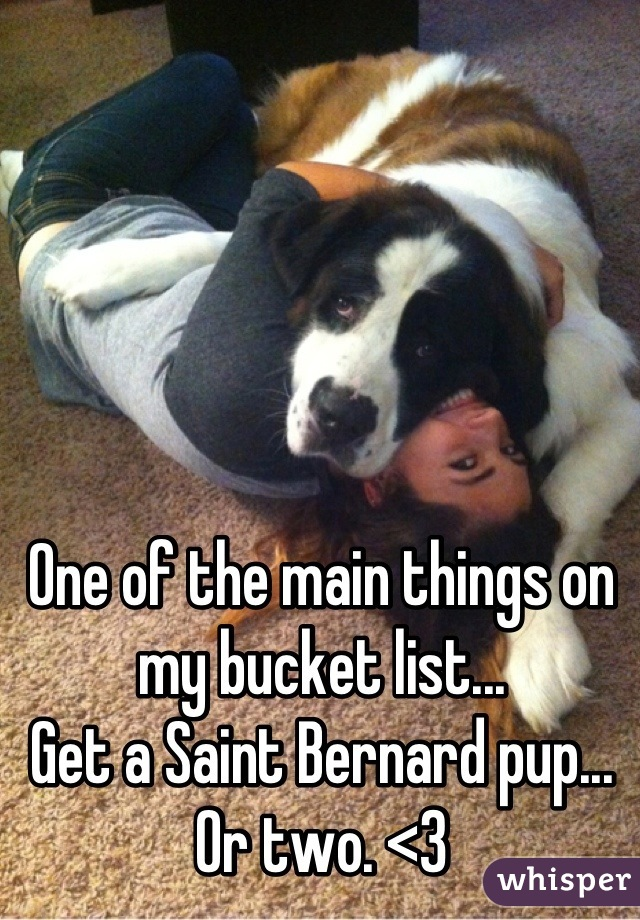 One of the main things on my bucket list... Get a Saint Bernard pup... Or two. <3