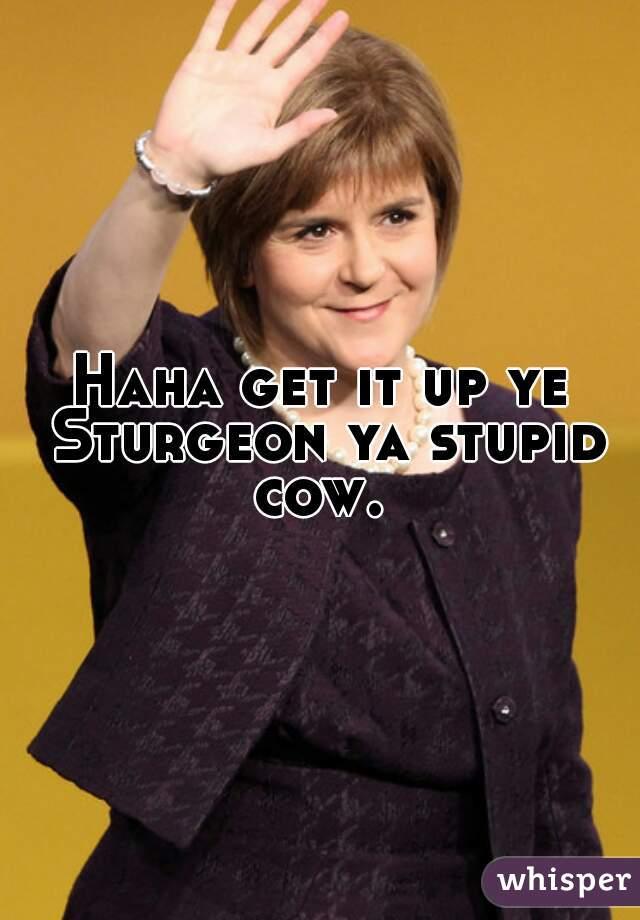 Haha get it up ye Sturgeon ya stupid cow.